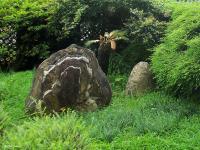 magic of Tian Mu Taipei