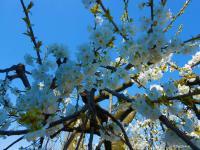 Pier Paderni - la primavera bussa gentilmente