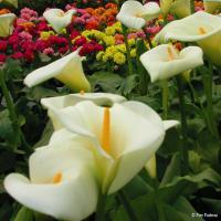 Pier Paderni - sogno di primavera