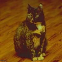 Lorien...24 anni, la regina del Salone dei frammenti