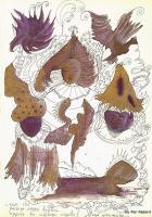 Pier Paderni - Rune gnom, Andromeda Files
