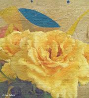 Pier Paderni - Andromeda Library - soft yellow